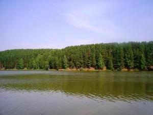 Пруд Можга